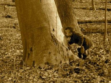 sfaturi de la un copac