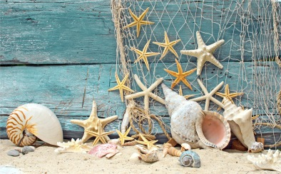 seashells-starfish-sand-holidays-summer-net